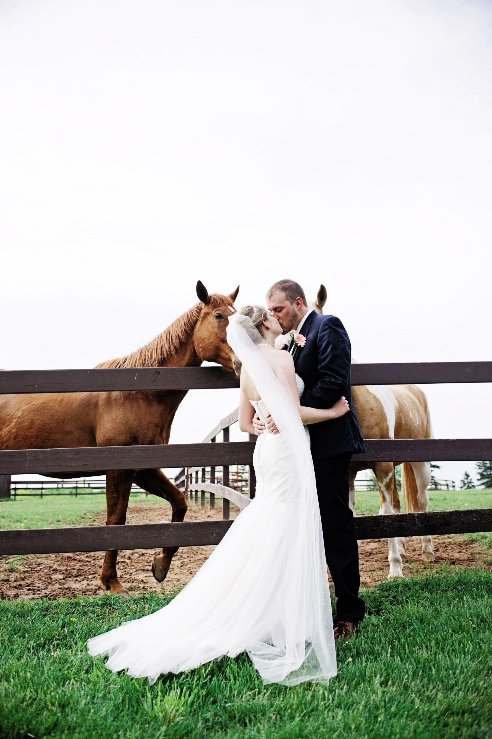 horses of Lakeview Farms in York, PA hope to get in on the action of this photo taken by Lovefusion Photography. Featured in Dream Weddings.